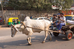 Bullock cart in the busy street of Delhi, India Royalty Free Stock Photography