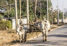 Bullock cart Stock Images