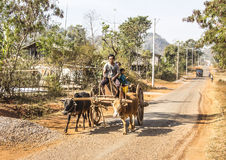 Bullock cart. A farmer is driving his bullock cart along a country road near Loikaw, Myanmar Stock Photography
