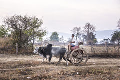 Bullock cart Stock Photography