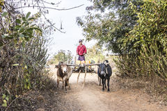 Bullock cart Royalty Free Stock Photos