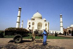 Bullock cart in front of Taj mahal. A bullock cart full of dry leaves collected from the ground of Taj Mahal, India Stock Photos