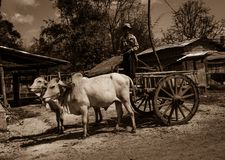 Bullock cart Royalty Free Stock Photography