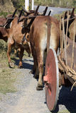 Bullock cart or ox cart, one of the most primitive means of tran Stock Photo