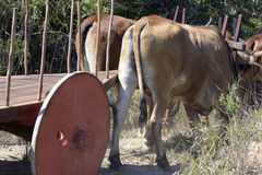 Bullock cart or ox cart, one of the most primitive means of tran Stock Images