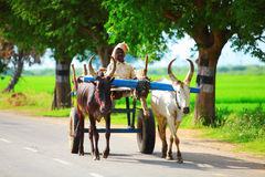 Bullock cart. A bullock cart or ox cart is a two-wheeled or four-wheeled vehicle pulled by oxen (draught cattle). It is a means of transportation used since Stock Image