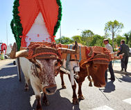 Bullock cart, the pilgrimage of El Rocio in Seville, Andalusia, Spain Stock Photo