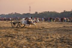 Bullock cart race Stock Photos