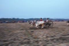 Bullock cart race Royalty Free Stock Images