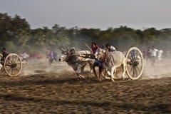 Bullock cart race Royalty Free Stock Photos