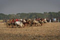 Bullock cart race Stock Photo