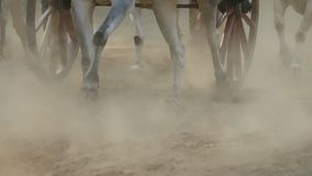 Bullock cart race in small town Nagaon near Alibaug in Maharashtra India. Stock Photography