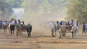Bullock cart race in small town Nagaon near Alibaug in Maharashtra India, on auspicious first day of Maharashtra calender on Marc. Maharashtra India -March 31st stock video footage