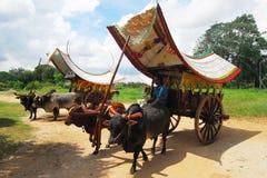 Bullock cart ride Stock Images