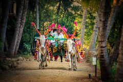 Bullock cart ride royalty free stock photography