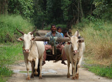 Bullock Cart. In some parts of Sri Lnaka Bullock Cart still is the only means to travel Stock Photos
