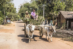 Bullock cart. Tw persons are sitting on top of a fully packed bullock cart, making a transport on the so called island of ogre at Mawlamyine, Myanmar Stock Photo