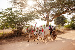 Bullock carts transport local people and tourists Stock Photography