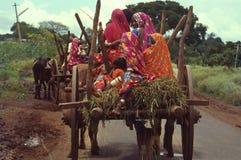 Bullock-chariots de déplacement de nomades photos stock