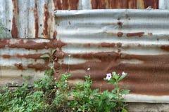 Bulloni a catena dello zinco d'acciaio della ruggine diy Immagini Stock Libere da Diritti