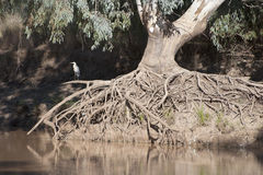 Bulloo river Royalty Free Stock Images