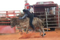 Bullrider slipping off bull at the rodeo Stock Photo