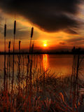 Bullrush Sunset. Taken at Craigavon lakes in Co Armagh Ireland Stock Photography