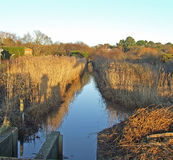 Bullrushed stream. Stream that's surrounded by bulrushes going off into the distance with trees and a sluice gate Stock Images