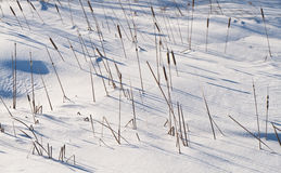 Bullrush shadows on the snow Royalty Free Stock Images