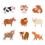 Bulls cows farm animal character vector illustration cattle mammal nature wild beef agriculture. Royalty Free Stock Images