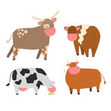 Bulls cows farm animal character vector illustration cattle mammal nature wild beef agriculture. Royalty Free Stock Photo