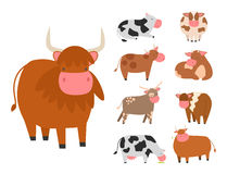 Bulls cows farm animal character vector illustration cattle mammal nature wild beef agriculture. Set of bulls and cows farm animal character vector illustration stock illustration