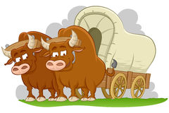 Bulls drawn covered wagon Stock Photos