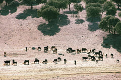 Bulls farm in Spain Stock Photography