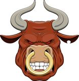 Bulls head. Ferocious head of a bull with a ring in his nose Stock Photos