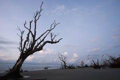 Bulls Island. Boneyard Beach on Bulls Island in the Cape Romaine National Wildlife Refuge, South Carolina stock photo