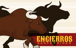 Bulls Silhouette and Red Label for Spanish San Fermin Celebration, Vector Illustration. Banner with bulls silhouette running in a traditional encierro in the Stock Image