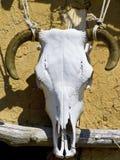 A bulls skull Stock Photo