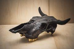 Bulls skull Royalty Free Stock Photos