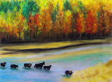 Bulls were crossing the river Stock Image