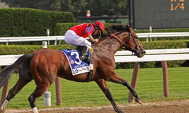Bullsbay wins the Whitney Stakes Royalty Free Stock Images