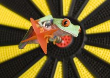 Bullseye imagem de stock