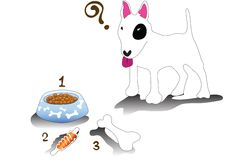 Bullterrier feeding time Stock Photos
