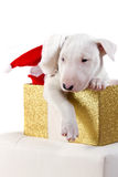 Bullterrier puppy with Santa hat Royalty Free Stock Photo