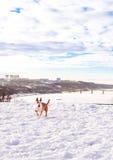 Bullterrierhund im Winterpark Lizenzfreie Stockfotos