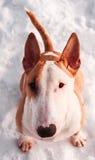 Bullterrierhund im Winterpark Lizenzfreie Stockbilder