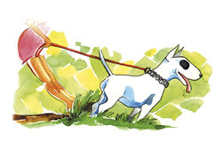 bullterrierhunden går Royaltyfria Bilder