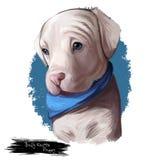 Bully kutta puppy dog breed digital art illustration. Bully kutta puppy dog breed. Strong aggressive dog Indian Pakistani Alangu type. Muscular mammal strongest Stock Illustration