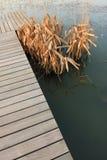 bulrush моста стоковые изображения rf