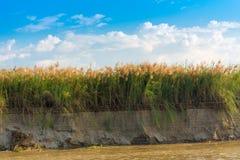 Bulrush на реке Irrawaddy, Мандалае, Мьянме, Бирме Скопируйте космос для текста стоковое фото rf